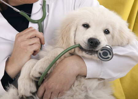 veterinary debt collection
