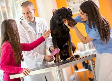 vet billing